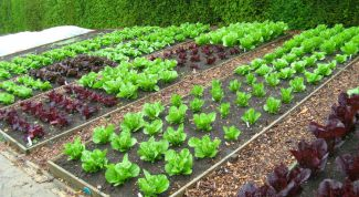 Как правильно распланировать грядки в огороде