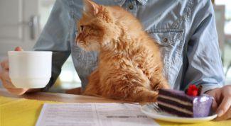 Как подобрать корм для домашней кошки