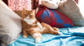 Как воспитывать кошку: 10 правил