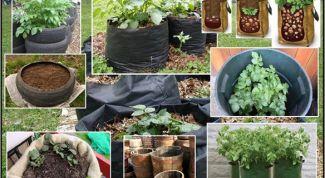 Как посадить картошку вертикально, чтобы получать супер-урожаи