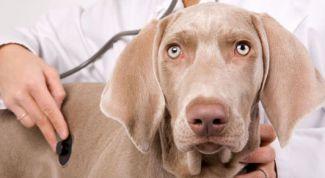 Как правильно ставить ударение в слове «ветеринария»