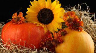 Что принесёт год Солнца-2017 садоводам и огородникам