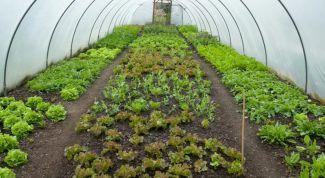 Какие семена посеять в теплице для раннего урожая весной