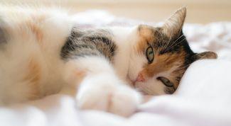 Что делать, если гуляет кошка