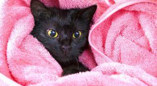 Как помыть кошку без травматизма