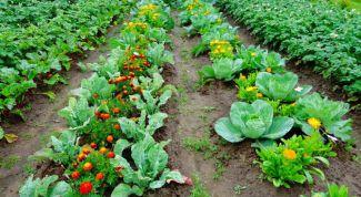 10 хитростей, которые помогут в огороде