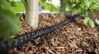 Полив растений микропористыми сочащимися шлангами: преимущества и недостатки