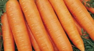 Какие сорта моркови подходят для Урала и Сибири