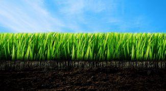 Как сделать почву плодородной
