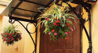 Какие цветы подходят для подвесных корзин