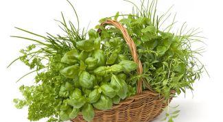 Как заготовить свежую зелень на зиму