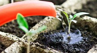 Как правильно и часто поливать помидоры в теплице