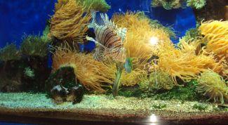 Как определять качество воды в аквариуме
