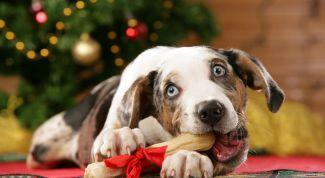 Год Желтой Собаки 2018: как встречать, чтобы привлечь удачу