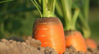 Чем подкормить морковь для роста