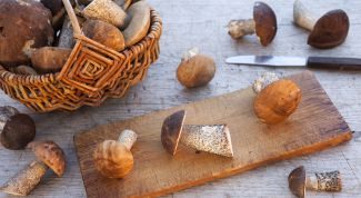 Как приготовить грибы подберезовики