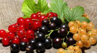 Как заготовить черную и красную смородину на зиму