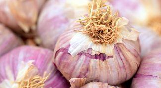 Как посадить зимний чеснок: подготовка почвы и уход
