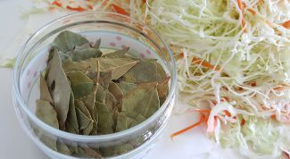 Сколько надо класть соли при квашении капусты