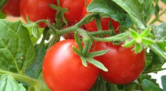 Как правильно хранить томаты