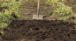 Чем удобрить землю под картофель осенью