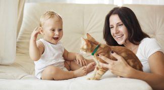 Что делать, если у ребенка аллергия на шерсть животного
