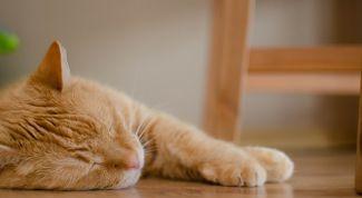 Почему иногда полезно лениться