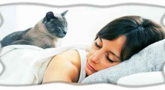 Значение сновидения: увидеть кошку во сне