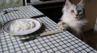 Как отучить домашнего питомца воровать еду
