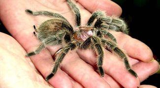 Почему не следует убивать пауков в доме