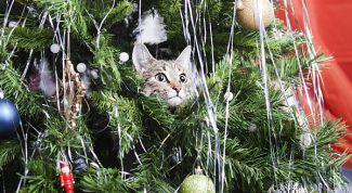 Как обезопасить елку от кошки