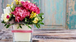Какие 8 комнатных растений приносят женское счастье и удачу в дом