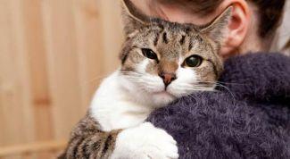 Как распознать любовь и доверие котов