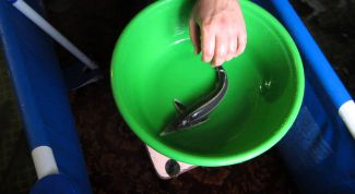 Как кормить осетровых рыб