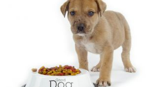 Корм для собак: как выбрать лучший?