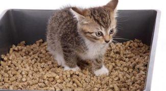 Как выбрать хороший наполнитель для кошачьего лотка