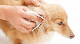 Как убрать запах тела у собак