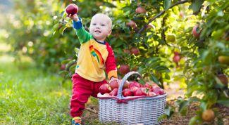 Что делать, если у ребенка аллергия на красные продукты