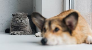 Корма для кошек и собак: 10 брендов, о которых стоит знать