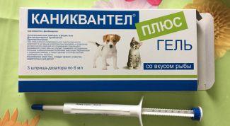 """""""Каниквантел"""" для кошек: показания, инструкция по применению"""