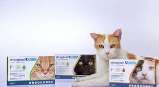 """""""Стронгхолд"""" для кошек: показания, инструкция по применению, дозировка и противопоказания"""
