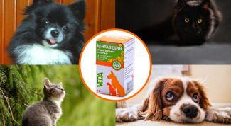 «Дентавидин» для ухода за проблемными деснами и зубами у собак и кошек: инструкция по применению