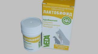 """""""Лактобифид"""" для кошек: показания, особенности, применение"""