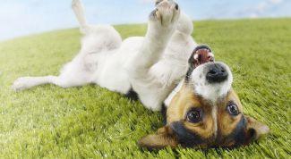 Как правильно дрессировать собаку любой породы