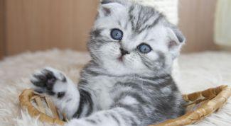 Какие бывают лотки для котят?