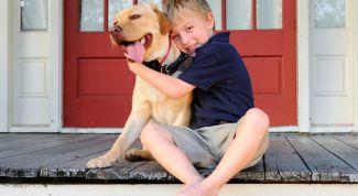 Как ухаживать за собакой во время самоизоляции