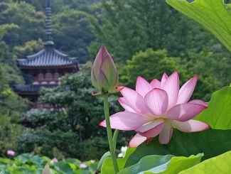 Чудо-цветы
