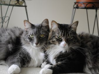 How to make two cats