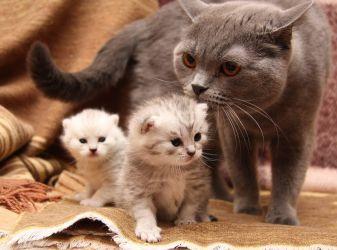 Как правильно глистогонить кошек и котят