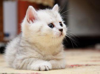 Как переехать с котом на ПМЖ в Европу в 2018 году?